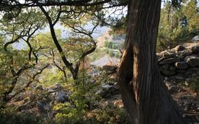 Naturaleza, Crimea, montaa gato, Papel pintado, rbol, Plantas, otoo
