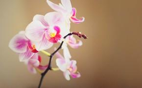 Орхидея, цветок, красиво, нежно, плёнка, шум
