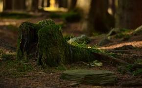 bosque, mun, musgo, hierba, rama