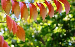 осень, листья, яркие краски