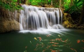 瀑布, 水, 鱼, 青菜