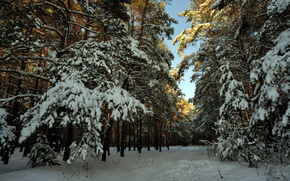 snow, Winter, forest, landscape