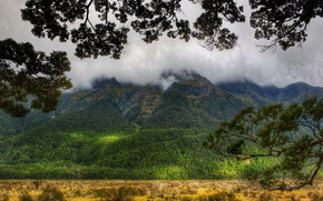 Montagnes, sylviculture, nuages, branche, nouvelle-zlande