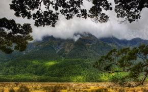 Montagne, silvicoltura, nuvole, ramo, neozelandese