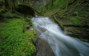 河, 森林, 草, 流