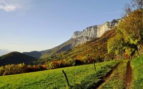 Montagne, erba, traccia, recinto, alberi, verdura