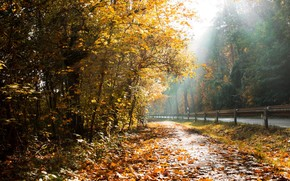 дорога, листья, осень