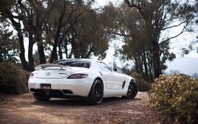 Mercedes Benz, SLS AMG, Color blanco, Vista posterior de la, ala, rboles, cielo,, Mercedes