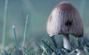 蘑菇, 草, 绿色