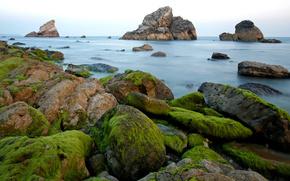 rocce, alga marina, oceano, acqua
