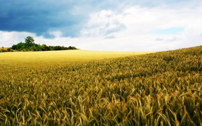 rye, field, nature, World, sky