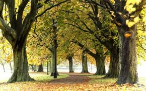 park, Trees, autumn, nature