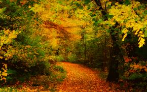 秋天, 树, 叶子, 黄, 追踪