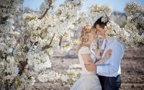 primavera, matrimonio, lilla, coppia, tipo, ragazza, sposa, Sposo
