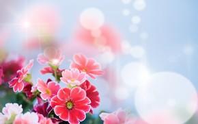 fiori, tenerezza, bokeh