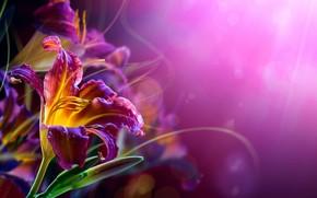 лилии, изгибы, усики, цветы