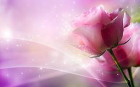 цветок, роза, изгибы