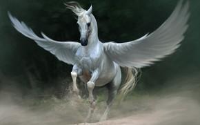 Art, Fantasy, Pegasus, horse, white, wings, dust, sand