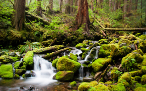 forest, river, creek, stones, moss, Trees, thicket