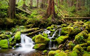 лес, река, ручей, камни, мох, деревья, чаща