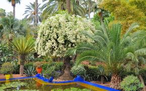 Marocco, marrakech, Jardin Majorelle