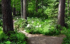 foresta, traccia, paesaggio