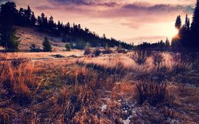 hierba, paisaje, cielo, Naturaleza, sol