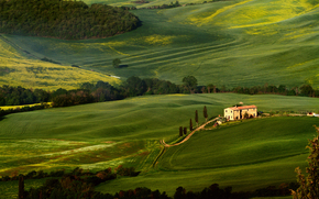 Tuscany, field, Trees, greens