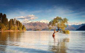 Новая Зеландия, остров Южный, озеро Уанака, горы, утро, вода, дерево