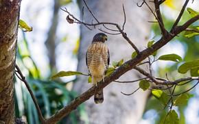 bird, tree, background