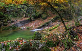 autumn, water, stones, moss, Trees, river, lake, leaves