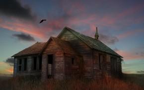 арт, дом, руины, заброшенность, птица, орел, трава, сухая