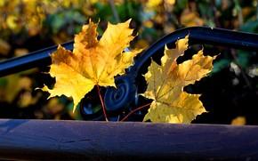 autunno, fogliame, negozio, parco