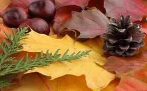 bump, leaves, yellow, chestnuts, thuja, autumn