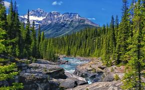 mistaya river, alberta, canada, Альберта, Канада, река, горы, лес, деревья, скалы