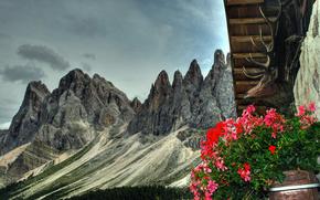 крыша, голова, олень, рога, клумба, цветы, горы, природа