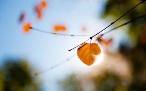 macro, branch, light, reflections, list, autumn