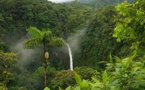 Selva, bush, jungle, Rainforest, Trees, liana, Plants, moisture, nature