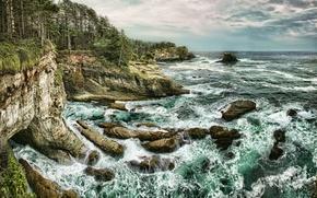 海, 岩石, 树, 滨