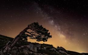 Nacht, Stern, Milchstrae, Felsen, Baum, Steine