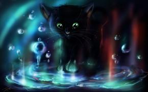 gattino, acqua, bolle