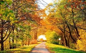 яркая, осенняя, алея, краски, осени, осень, золотая.