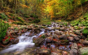 autumn, forest, stones, river