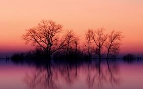 alberi, riflessione, tramonto