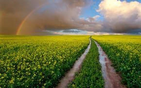 Южная Африка, поле, мокрая дорога, цветы, рапс, небо, облака, радуга, paul bruins photography