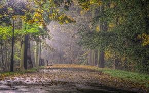 парк, скамья, деревья, пейзаж