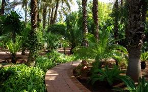 jardin, Maroc, marrakech jardin majorelle
