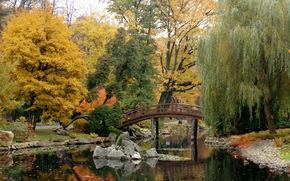 giardino, giapponese, giardino wroclaw, Polonia