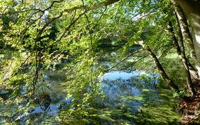 lago, alberi, ramo