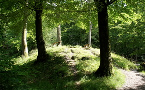 forest, benches, landscape